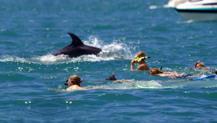 Swimming with dolphins New Zealand
