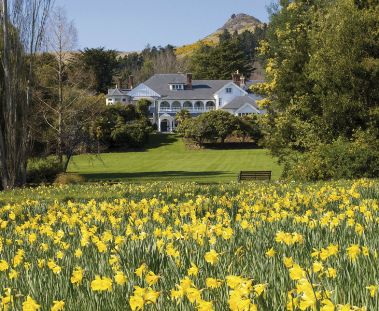 Otahuna Lodge Daffodils, Christchurch