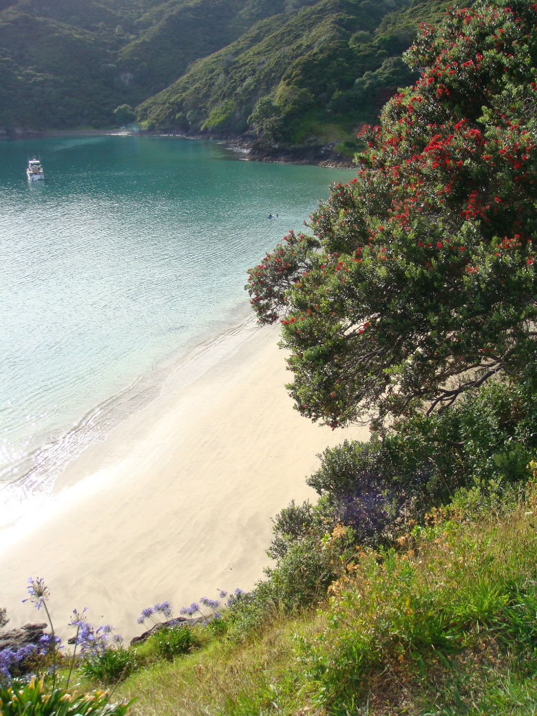 Oke Bay has to be one of the top beaches in New Zealand