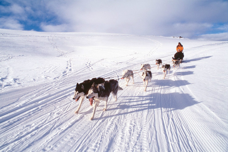 Dog Sledding Queenstown