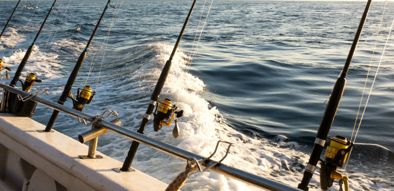 With its prolific sea life a saltwater fishing charter in the Bay of Islands is a highly recommended activity in the Bay of Islands