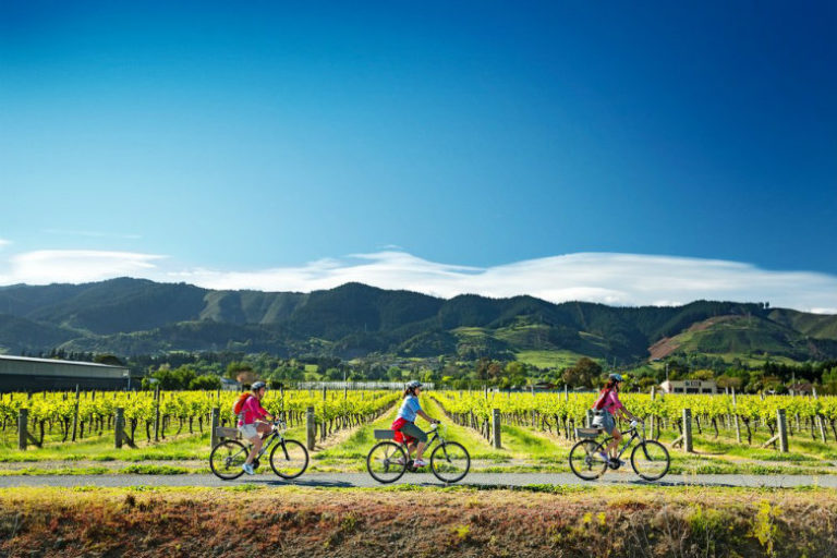 Biking the vines Marlborough