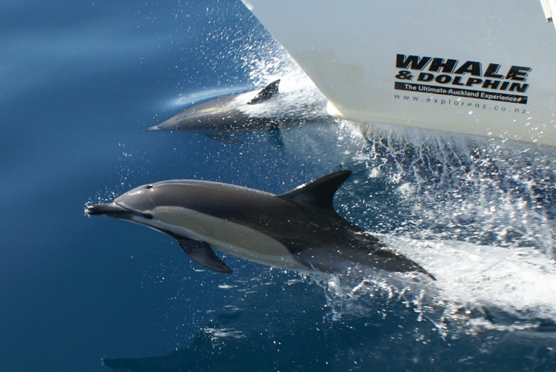 Whales and Dolphin Safari in Auckland