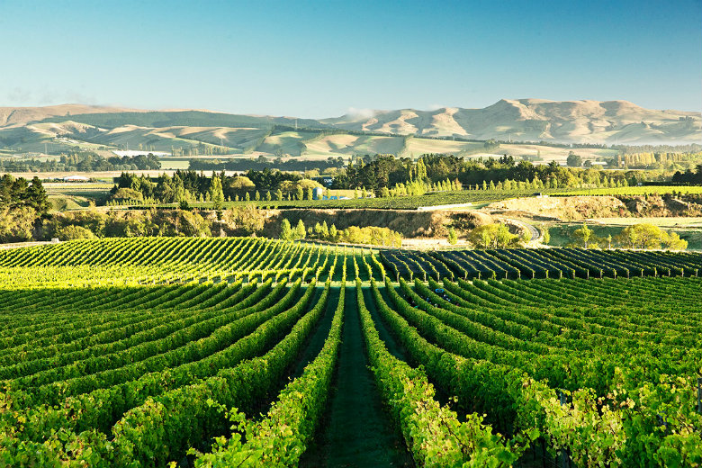 Wine Tasting in the Waipara region is a relaxing activity when in the Christchurch and Canterbury region.
