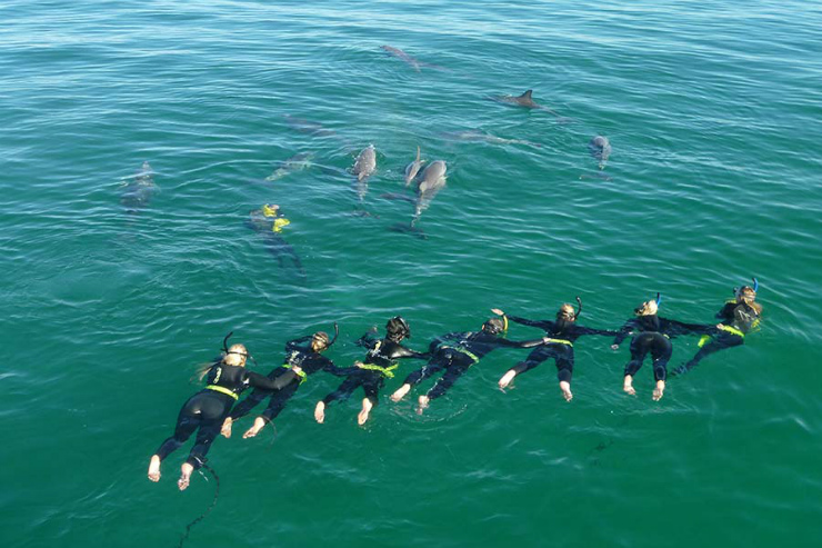 Dolphin swim Australia, Photo credit Rockingham Wild Encounters