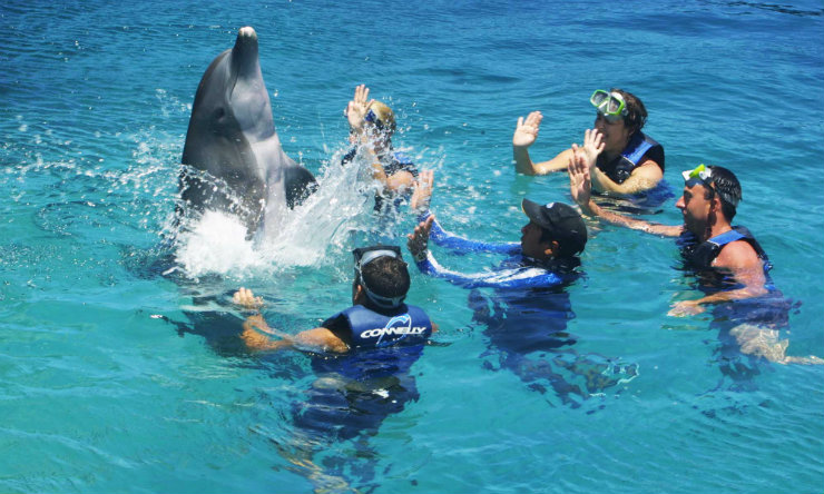 Swim with dolphins in Tahiti